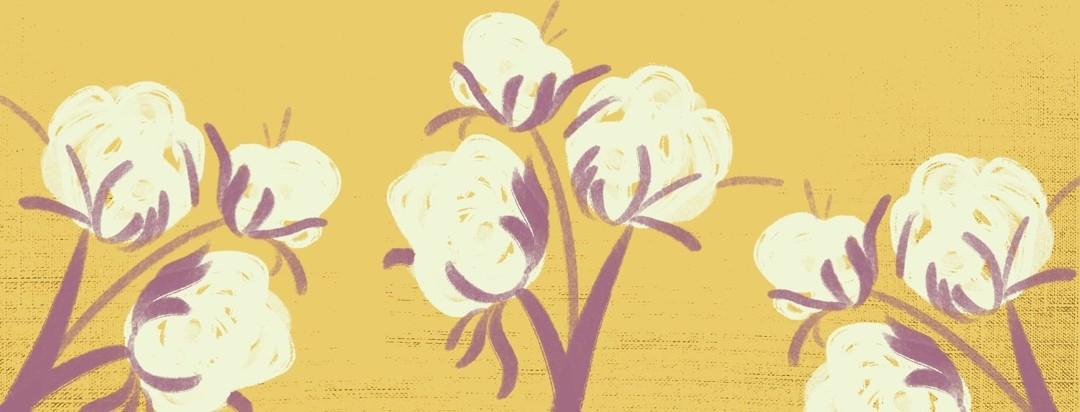 Warm fluffy cotton plants